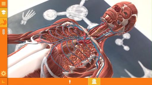arloon-anatomy-17-4-s-307x512.jpg